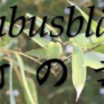 Bambusblätter Dezember 2016