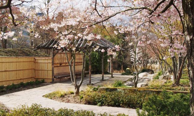 Vortrag: Eine schwäbische Gärtnerin in Japan und der Japan-Garten in Stuttgart